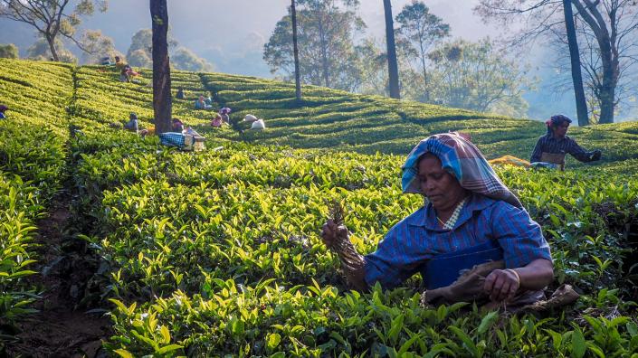 India photography Holidays - Stewart Kenny Photography
